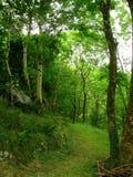 Verde del ` s de Irlanda Imágenes de archivo libres de regalías