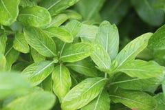 Verde del verano tardío Imagenes de archivo