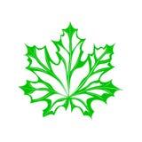 Verde dell'acero della foglia Immagine Stock Libera da Diritti