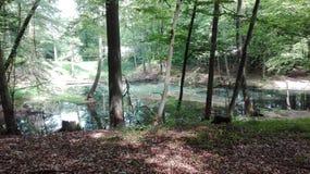 Verde dell'acqua dell'albero Fotografia Stock