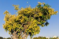 Verde dell'albero Immagini Stock