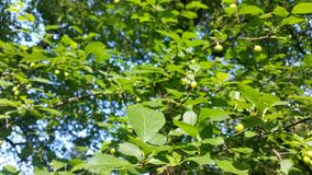Verde dell'albero Fotografie Stock Libere da Diritti