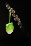 Verde dell'uovo di Pasqua Sul nero Immagine Stock Libera da Diritti