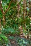 Verde della giungla fotografia stock