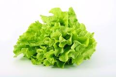 Verde della lattuga su una priorità bassa bianca Immagini Stock Libere da Diritti