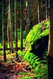 Verde della natura Immagini Stock Libere da Diritti