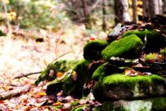 Verde della natura fotografia stock