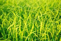 Verde della natura Fotografie Stock