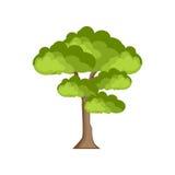 Verde della natura dell'albero Immagini Stock