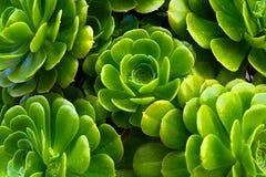 Verde della pianta Immagine Stock Libera da Diritti