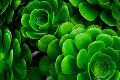 Verde della pianta Fotografie Stock Libere da Diritti