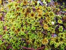 Verde della schiuma del muschio 3000 metri Fotografia Stock