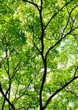 Verde della siluetta e della foglia della corteccia Immagini Stock Libere da Diritti