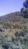 Verde della terra Immagine Stock