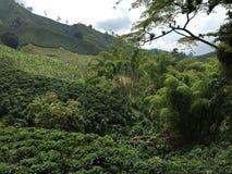 Verde della valle del caffè della Colombia fotografia stock libera da diritti