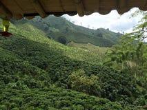Verde della valle del caffè della Colombia fotografia stock