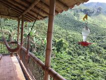 Verde della valle del caffè della Colombia immagine stock