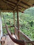 Verde della valle del caffè della Colombia immagini stock