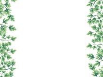Verde delle foglie del prezzemolo ai confini illustrazione di stock