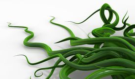 Verde delle viti della pianta, angolo denso Fotografie Stock