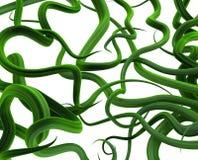 Verde delle viti della pianta, fondo aggrovigliato Immagine Stock Libera da Diritti