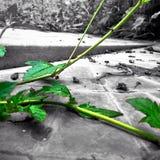 Verde di arte Immagine Stock