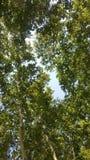 Verde di baum dell'albero fotografia stock libera da diritti