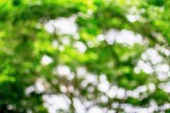 Verde di Bokeh dall'albero Immagine Stock