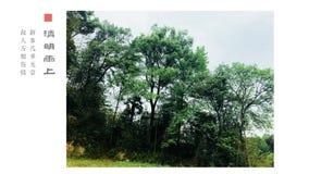 Verde di botanica della Cina fotografie stock