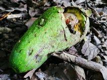 Verde di decomposizione della frutta fotografia stock libera da diritti