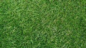 verde di erba Immagine Stock