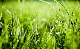 verde di erba Immagini Stock