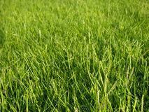 Verde di erba fotografie stock libere da diritti
