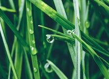 verde di erba del fuoco del primo piano selettivo Una goccia di rugiada su un foglio fotografia stock libera da diritti