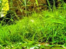 Verde di erba della natura naturale Fotografia Stock Libera da Diritti