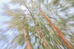 Verde di fondo vago albero, effetto dello zoom della lente di luminosità fotografia stock libera da diritti
