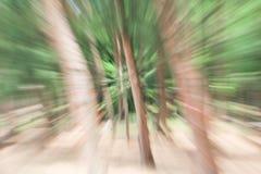 Verde di fondo vago albero, effetto dello zoom della lente di luminosità immagine stock