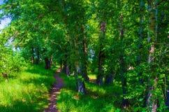 Verde di foresta Fotografie Stock