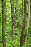 Verde di foresta Immagini Stock Libere da Diritti