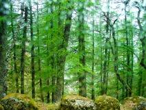 Verde di foresta con le rocce fotografia stock libera da diritti