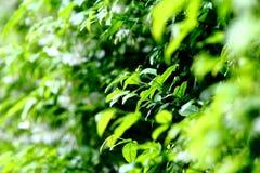 Verde di Freshy Immagine Stock Libera da Diritti