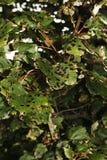Verde di Gretna Fotografie Stock Libere da Diritti