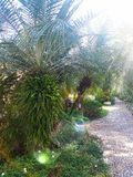Verde di Laef in giardino immagini stock
