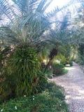Verde di Laef in giardino fotografie stock