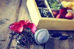 Verde di legno della rosa del tè Fotografie Stock Libere da Diritti