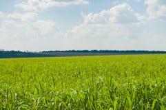 Verde di paesaggio file Immagine Stock
