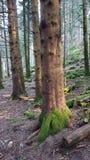 Verde di Sun della foresta dell'albero fotografie stock libere da diritti