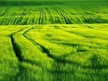 Verde do campo Fotografia de Stock Royalty Free