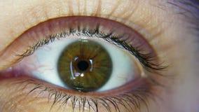 Verde do close-up ou olhares marrons do olho na câmera e nos piscamentos vídeos de arquivo