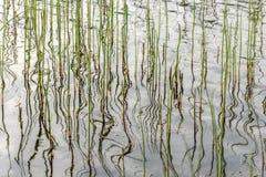 Verde do fundo da reflexão das estações de tratamento de água fotografia de stock royalty free